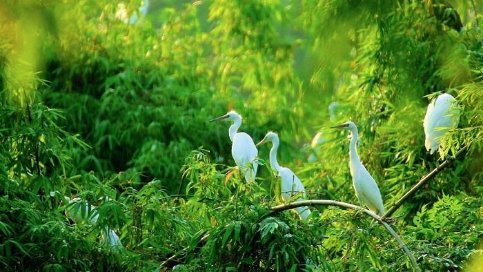 Mùa xuân xanh ngời ở làng Đồng Xuyên, Bắc Ninh - Ảnh: Khoi Tran Duc