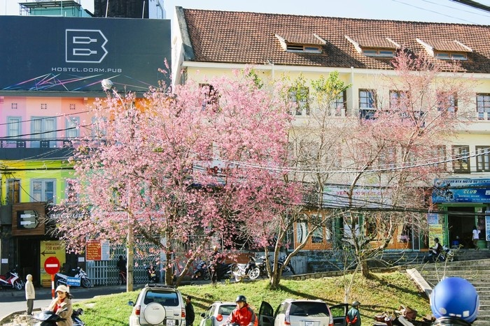 Sắc xuân ngập tràn những ngày nắng ở thành phố hoa - Ảnh: Paro Nguyen