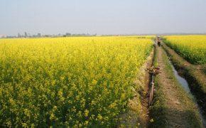 Đẹp mê mẩn màu vàng thu ở Việt Nam
