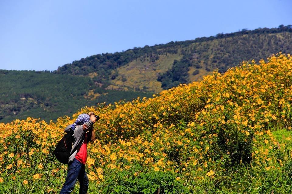 ..thế nên bạn có thể ghé thăm Mộc Châu, Lâm Đồng để lạc mình giữa những con đường dã quỳ vàng rực. - Ảnh: Sưu tầm
