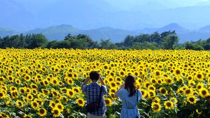 Lúc đó mới thấy, hoá ra Việt Nam mình, dù là xứ nhiệt đới nhưng vẫn có mùa thu vàng lộng lẫy đến nhường này. - Ảnh: Sưu tầm