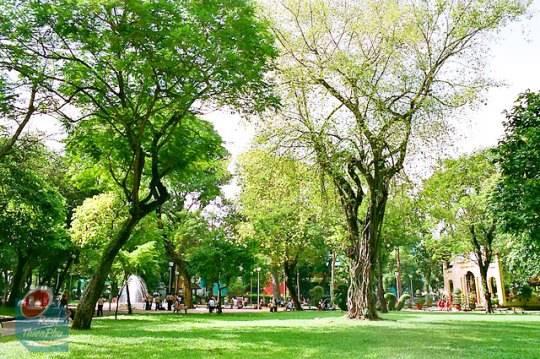 Công viên Tao Đàn: Không gian xanh mát nhưng vẫn gần gũi với cuộc sống nhộn nhịp bên ngoài.