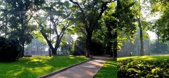 Thảo Cầm Viên: Khu vực xanh rộng nhất ở ngay trung tâm thành phố, với những rừng cây nhiều năm tuổi cao to rợp bóng mát, nhiều bãi cỏ xanh, giá vé vào cổng lại khá mềm.
