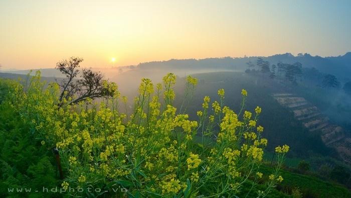 Đà Lạt lập đông, hoa vàng vừa mới nở - Ảnh: HD Photo