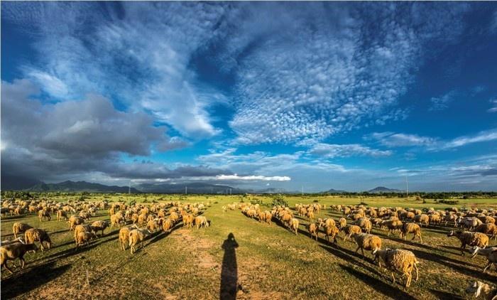 Thử cuộc sống du mục trên đồng cừu An Hòa