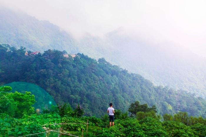 Bạt ngàn cảnh sắc xanh trong Tam Đảo đầy sức sống