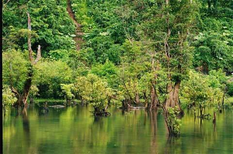 Những gốc cây xanh tốt giữa lòng hồ