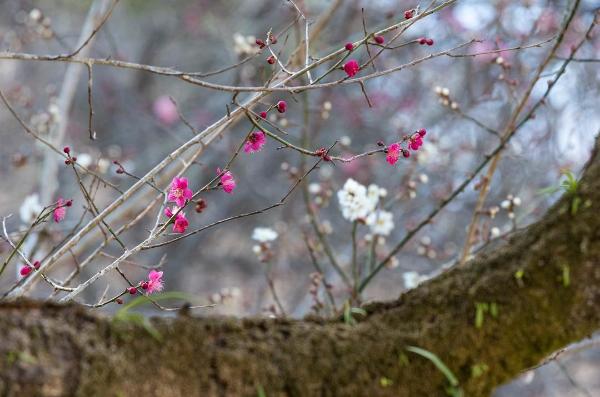 Nằm cách trung tâm Tokyo khoảng 1 giờ đồng hồ đi bằng tàu điện hoặc xe bus, núi Takao có độ cao khoảng 600m. Từ đỉnh núi Takao có thể nhìn thấy rõ cảnh núi Phú Sỹ – biểu tượng của xứ sở hoa anh đào quanh năm tuyết phủ trắng xóa. Trên đỉnh núi có đền, chùa cổ, không khí trong lành và rất nhiều cây hoa anh đào. Tại đây hoa anh đào nở kéo dài và muộn hơn trung tâm Tokyo khoảng 2 tuần.