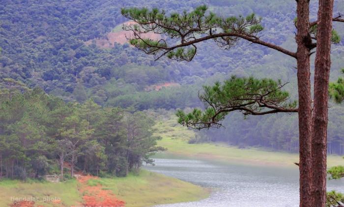 Màu xanh của những rừng thông ở gần hồ Tuyền Lâm