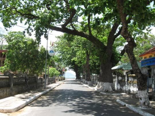 Du lịch Côn Đảo - Những hàng cây bàng râm mát khắp các con đường nhỏ lớn trên đảo