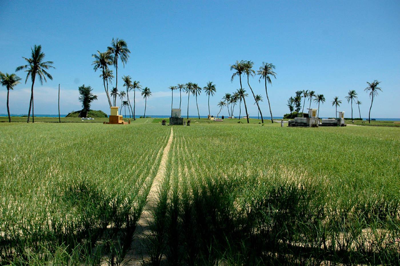 Ruộng tỏi ở đảo nhỏ Lý Sơn