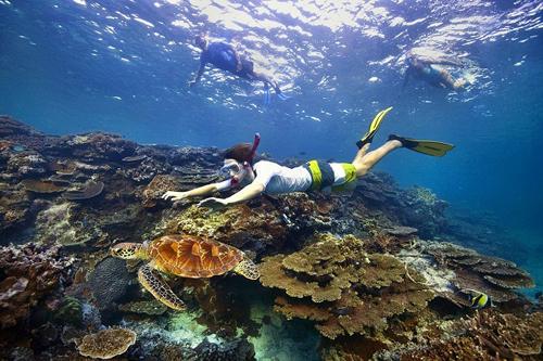 Khám phá thế giới kỳ thú dưới lòng đại dương.