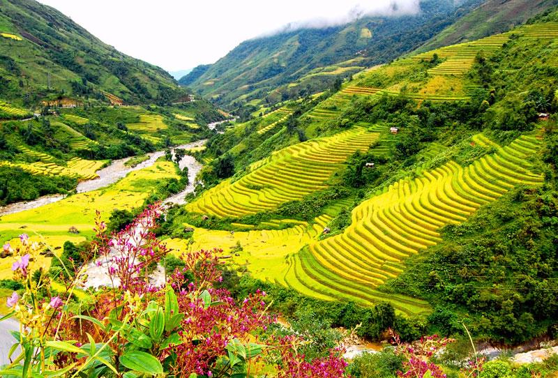 Vào tháng 4 – 5, Sa Pa tràn ngập trong sắc hoa đua nở và những cánh đồng xanh mướt. (Ảnh: Ivivu)