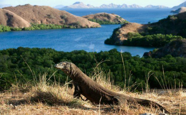 Tham quan đảo Komodo bằng thuyền có gì thú vị ?