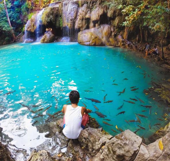 Cá tung tăng bơi lội dưới chân thác