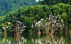 Khu Du Lịch Vườn Chim Thung Nham Ninh Bình