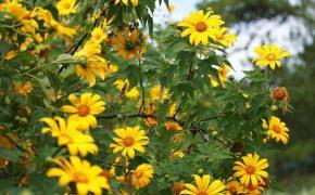 5 trải nghiệm ở Đà Lạt mùa trở gió