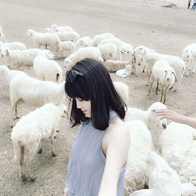 Đồng cừu trên con đường Phước Tân - Hội Bài (xã Suối Nghệ, huyện Châu Đức) được xem là địa điểm chụp ảnh hot nhất ở Vũng Tàu. Cừu được một số người dân thả nuôi trên cánh đồng. Bạn phải trả phí từ 50.000-150.000 đồng tùy số lượng người trong nhóm để chụp ảnh với cừu.